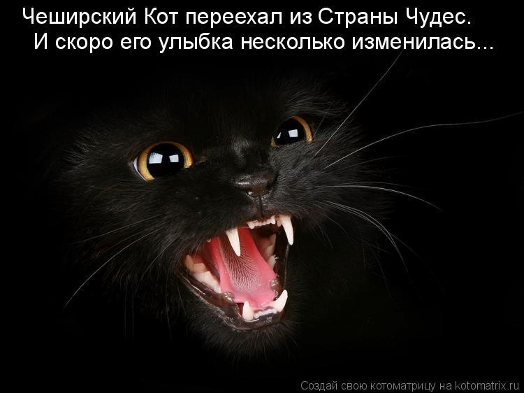 Котоматрица - Чеширский Кот переехал из Страны Чудес. И скоро его улыбка несколько и
