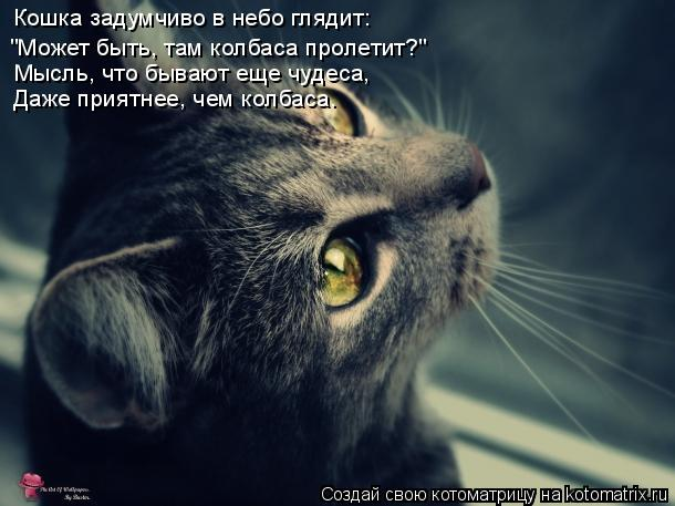 """Котоматрица: Кошка задумчиво в небо глядит: """"Может быть, там колбаса пролетит?"""" Мысль, что бывают еще чудеса, Даже приятнее, чем колбаса."""