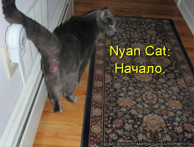 Котоматрица: Nyan Cat  Начало. :