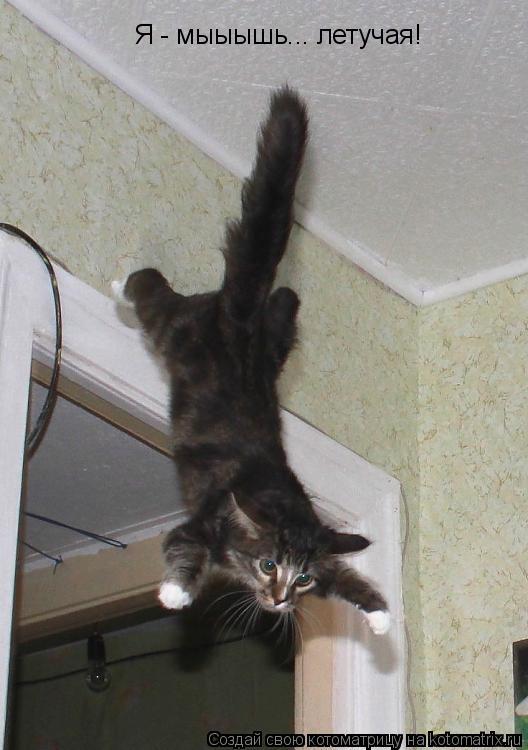 Котоматрица: Я - мыыышь... летучая!