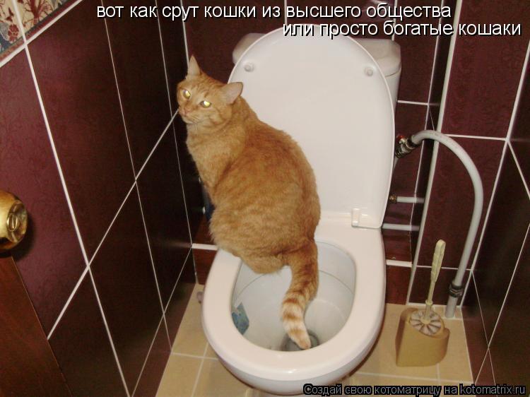 Старухи срут в туалете смотреть онлайн 9 фотография