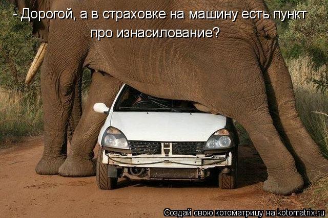 Котоматрица: - Дорогой, а в страховке на машину есть пункт про изнасилование?