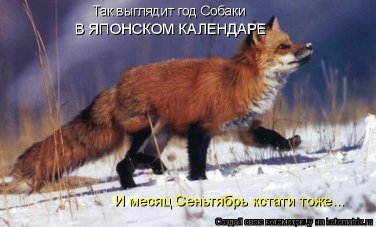 Котоматрица: Так выглядит год Собаки В ЯПОНСКОМ КАЛЕНДАРЕ И месяц Сеньтябрь кстати тоже...