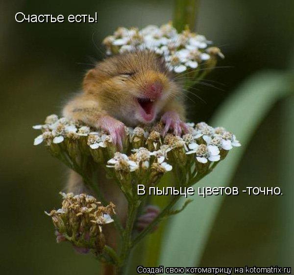 Котоматрица: Счастье есть! В пыльце цветов -точно.