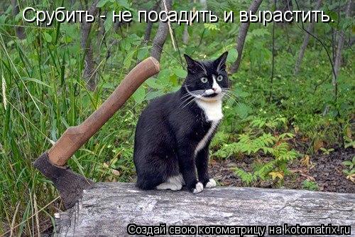 Котоматрица: Срубить - не посадить и вырастить.