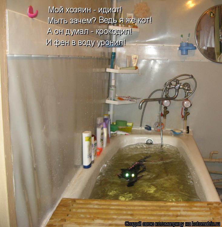 Котоматрица: Мой хозяин - идиот! Мыть зачем? Ведь я же кот! А он думал - крокодил! И фен в воду уронил!