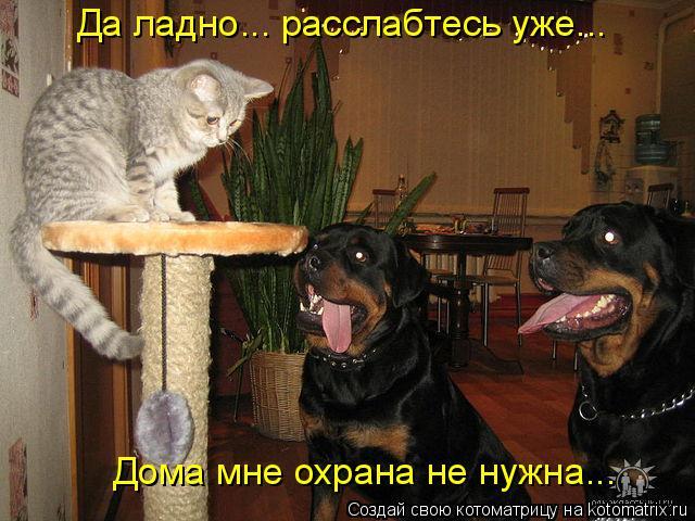 Котоматрица: Да ладно... расслабтесь уже... Дома мне охрана не нужна...