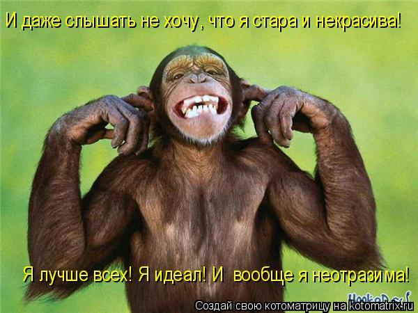 Котоматрица: И даже слышать не хочу, что я стара и некрасива! Я лучше всех! Я идеал! И  вообще я неотразима!