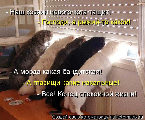 Котоматрица: - Господи, а рыжий-то какой! - А морда какая бандитская! - А глазищи какие нахальные! - Все! Конец спокойной жизни! - Наш хозяин нового кота тащит