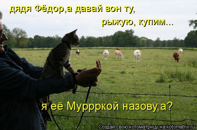 Котоматрица: дядя Фёдор,а давай вон ту, рыжую, купим... я её Муррркой назову,а?