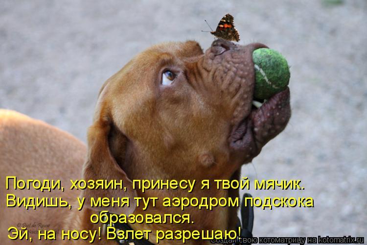 Котоматрица - Погоди, хозяин, принесу я твой мячик. Видишь, у меня тут аэродром подс