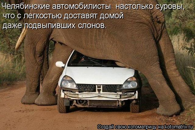 Котоматрица: Челябинские автомобилисты  настолько суровы,  что с легкостью доставят домой даже подвыпивших слонов.