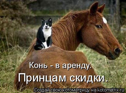 Котоматрица: Принцам скидки. Конь - в аренду.