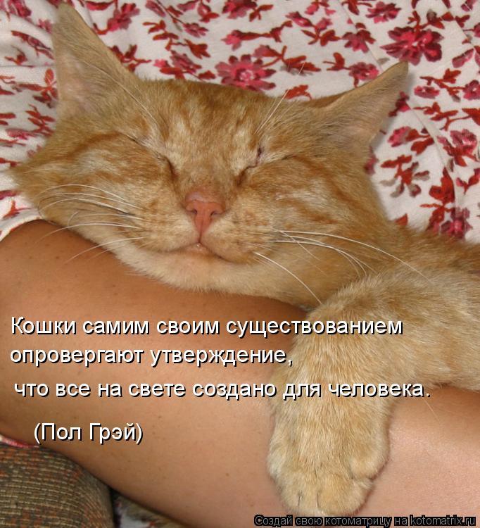 Котоматрица: Кошки самим своим существованием  опровергают утверждение,  что все на свете создано для человека. (Пол Грэй)