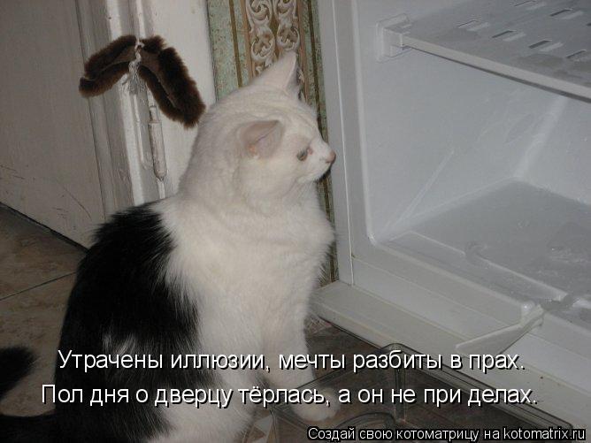 Котоматрица: Утрачены иллюзии, мечты разбиты в прах. Пол дня о дверцу тёрлась, а он не при делах.