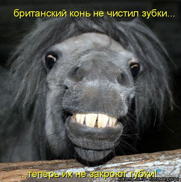 Котоматрица: британский конь не чистил зубки... ...теперь их не закроют губки!