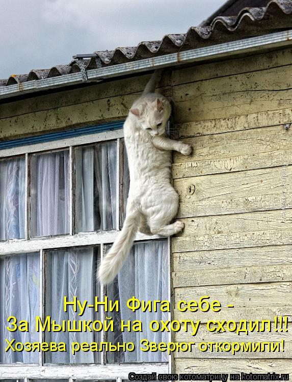 Котоматрица - Ну-Ни Фига себе -  За Мышкой на охоту сходил!!! Хозяева реально Зверюг