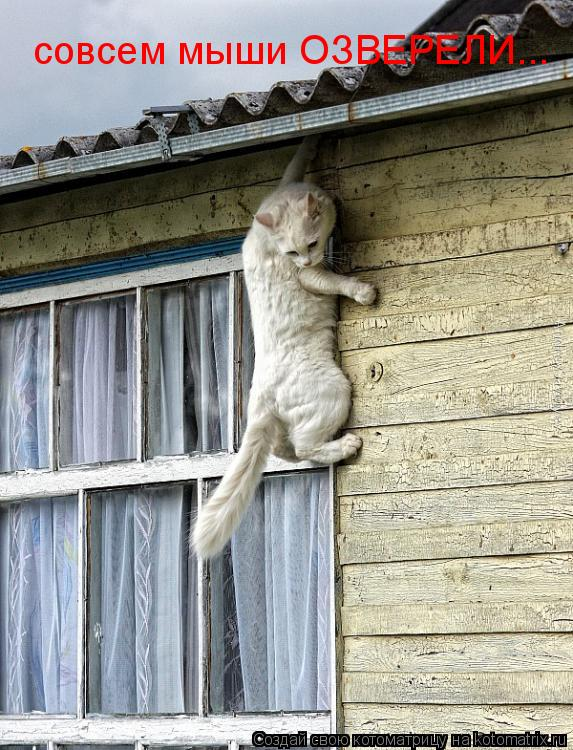 Котоматрица: совсем мыши ОЗВЕРЕЛИ...