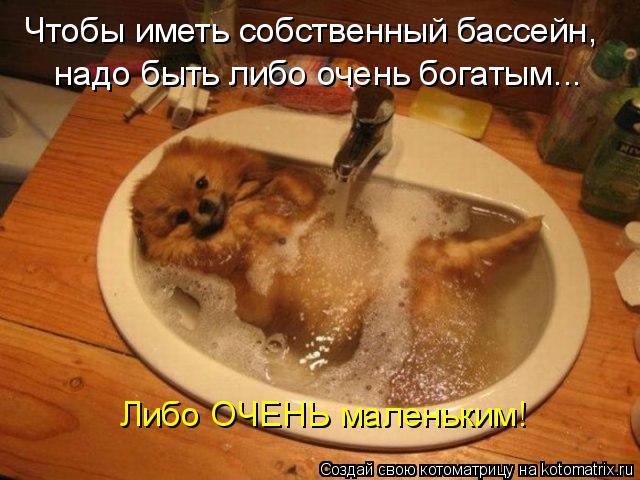 Котоматрица: Чтобы иметь собственный бассейн, надо быть либо очень богатым... Либо ОЧЕНЬ маленьким!