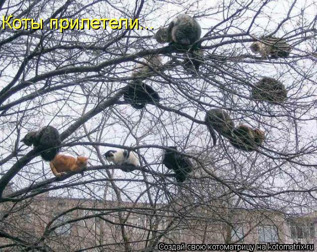 Котоматрица: Коты прилетели...