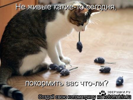 Котоматрица - Не живые какие-то сегодня, покормить вас что-ли?