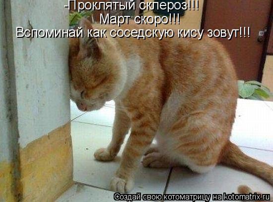Котоматрица - -Проклятый склероз!!!  Вспоминай как соседскую кису зовут!!!  Март ско