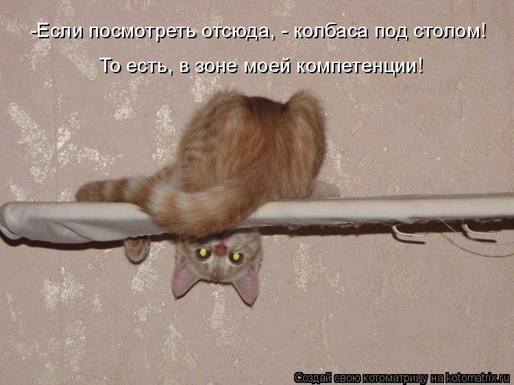 Котоматрица: -Если посмотреть отсюда, - колбаса под столом! То есть, в зоне моей компетенции!