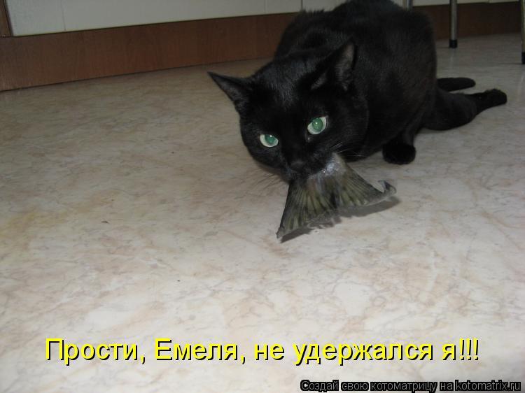Котоматрица - Прости, Емеля, не удержался я!!!