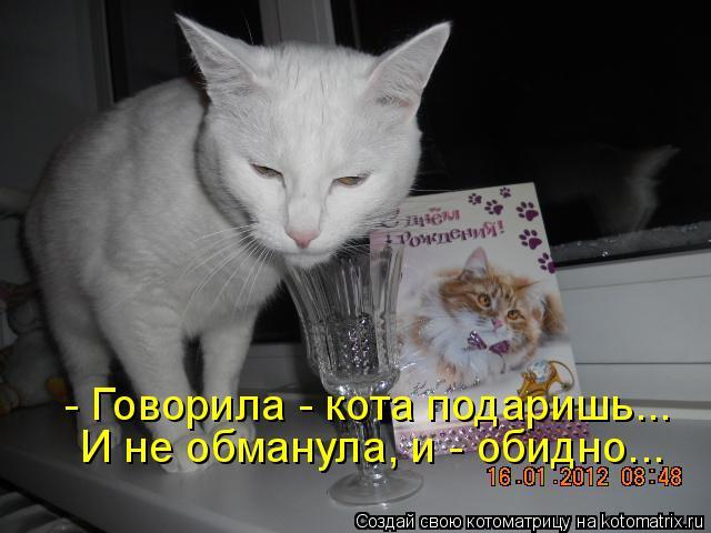 Котоматрица - - Говорила - кота подаришь... И не обманула, и - обидно...