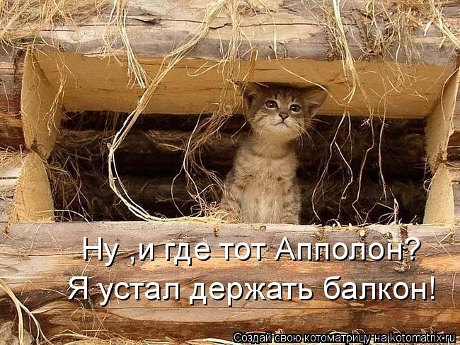 Котоматрица: Ну ,и где тот Апполон? Я устал держать балкон!