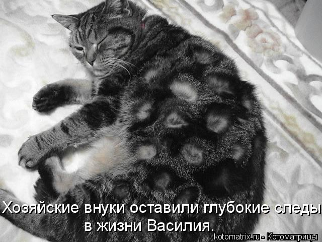 Котоматрица: Хозяйские внуки оставили глубокие следы  в жизни Василия.