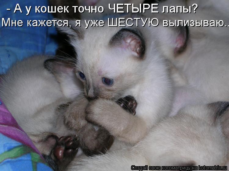 Котоматрица: - А у кошек точно ЧЕТЫРЕ лапы? Мне кажется, я уже ШЕСТУЮ вылизываю...