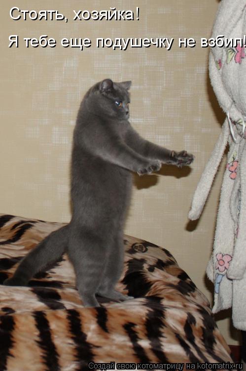 Котоматрица - Стоять, хозяйка!  Я тебе еще подушечку не взбил!