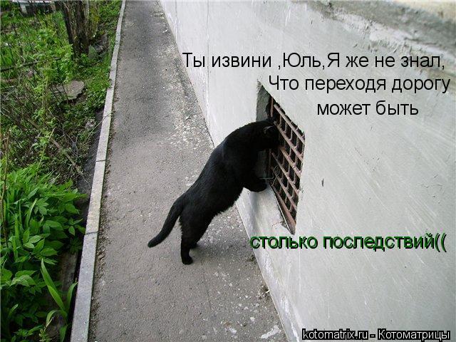 Котоматрица: Ты извини ,Юль,Я же не знал,  Что переходя дорогу  может быть  столько последствий((