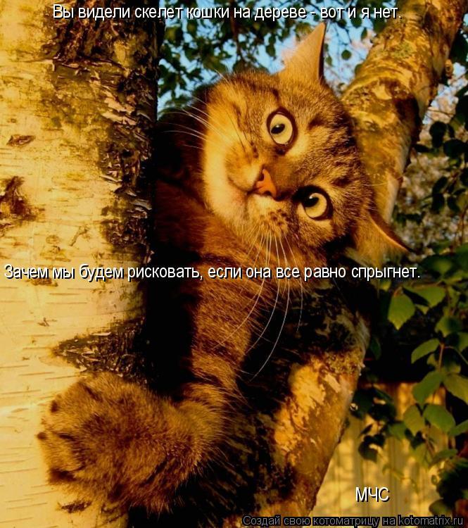 Котоматрица: Вы видели скелет кошки на дереве - вот и я нет.  Зачем мы будем рисковать, если она все равно спрыгнет.  МЧС