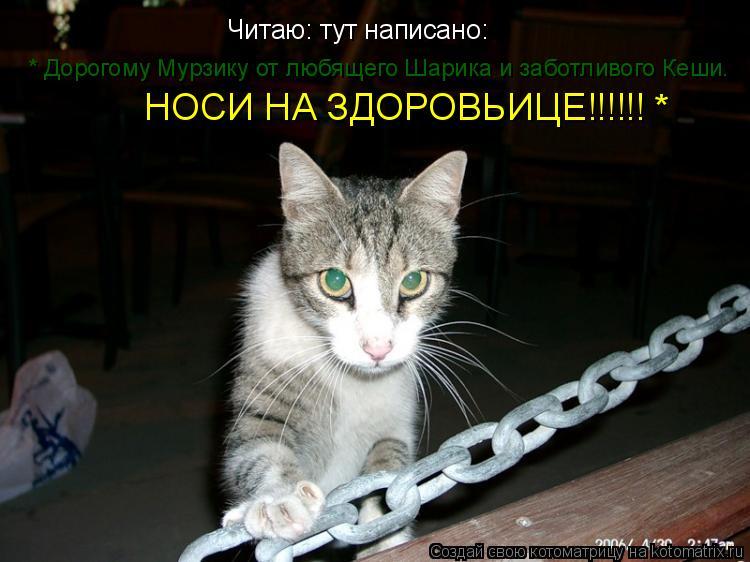 Котоматрица: Читаю: тут написано: * Дорогому Мурзику от любящего Шарика и заботливого Кеши. НОСИ НА ЗДОРОВЬИЦЕ!!!!!! *