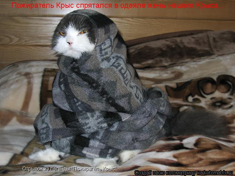 """Котоматрица: Пожиратель Крыс спрятался в одеяле жены нашего Крыса... Отрывок из легенды """"Пожиратель Крыс""""."""