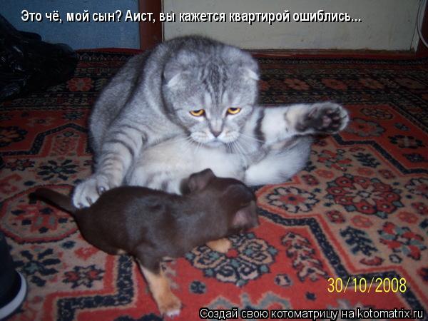 Котоматрица: Это чё, мой сын? Аист, вы кажется квартирой ошиблись...