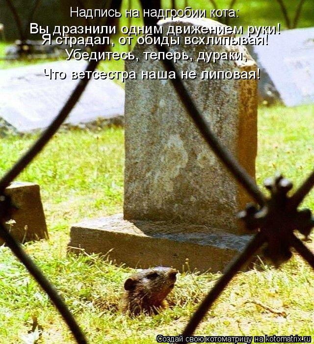 Котоматрица: Надпись на надгробии кота: Вы дразнили одним движением руки! Я страдал, от обиды всхлипывая! Убедитесь, теперь, дураки, Что ветсестра наша не