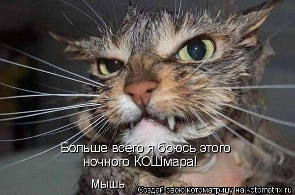 Котоматрица: Больше всего я боюсь этого ночного КОШмара! Мышь
