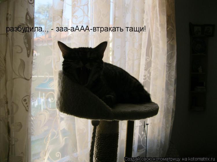 Котоматрица: разбудила.., - заа-аААА-втракать тащи!