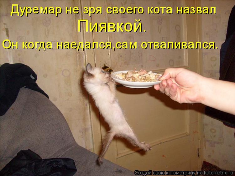Котоматрица - Дуремар не зря своего кота назвал Пиявкой. Он когда наедался,сам отвал