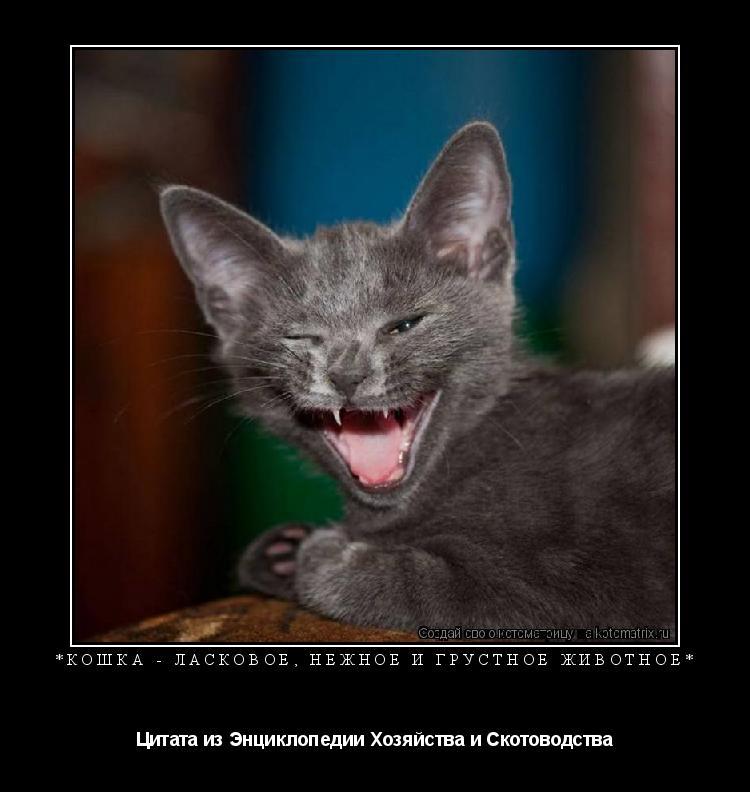Котоматрица: *кошка - ласковое, нежное и грустное животное* Цитата из Энциклопедии Хозяйства и Скотоводства