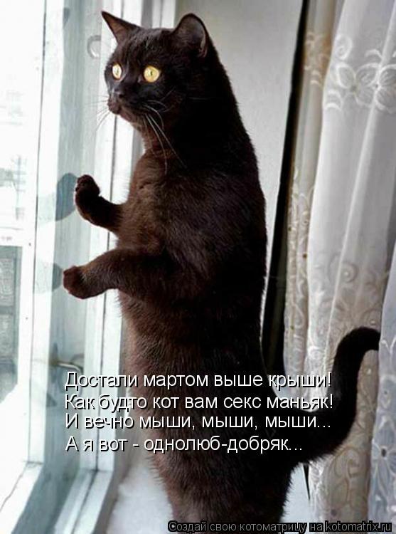 Котоматрица: Достали мартом выше крыши! Как будто кот вам секс маньяк! И вечно мыши, мыши, мыши... А я вот - однолюб-добряк...