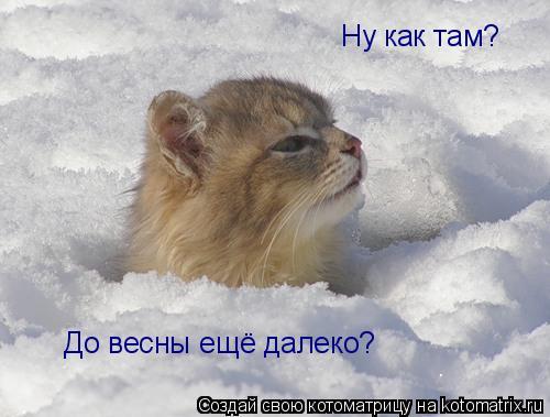 Котоматрица - Ну как там? До весны ещё далеко?