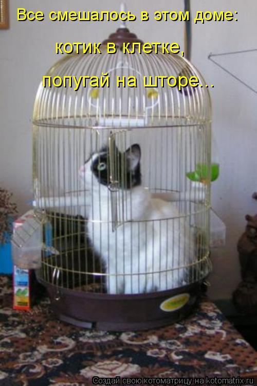 Котоматрица: Все смешалось в этом доме: котик в клетке,  попугай на шторе...