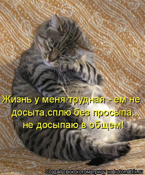 Котоматрица: Жизнь у меня трудная - ем не  досыта,сплю без просыпа... не досыпаю в общем!