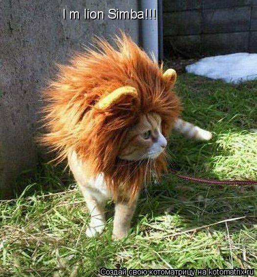 Котоматрица: I m lion Simba!!!