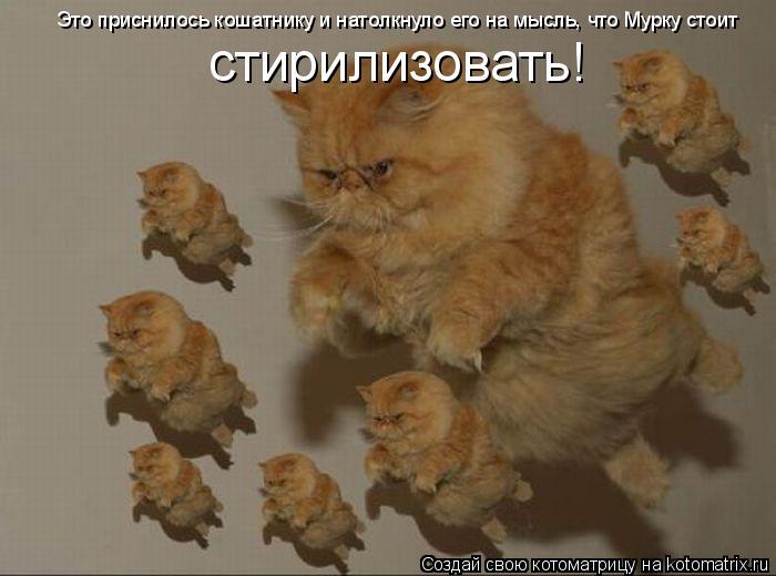 Котоматрица: Это приснилось кошатнику и натолкнуло его на мысль, что Мурку стоит стирилизовать!