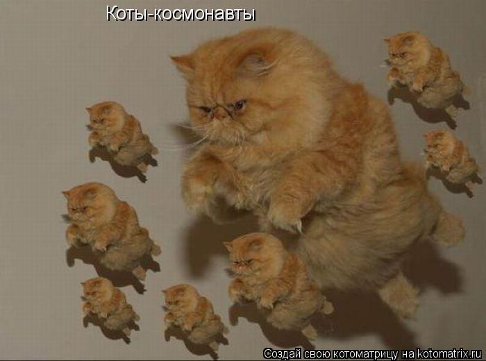 Котоматрица: Коты-космонавты